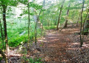 Path along Mt. Landing Creek