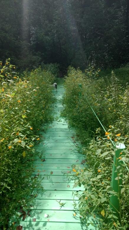 Pond bridge in summer