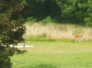 Strolling Doe in Armillary Park