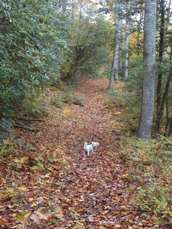 White dog among leaves